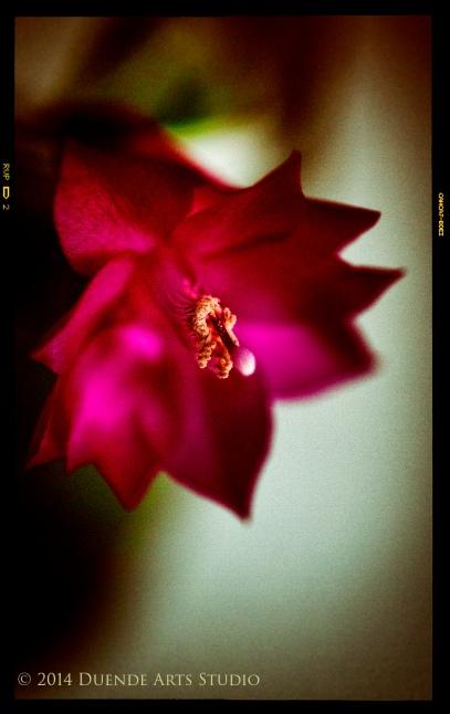 Cactus Flower 3124s